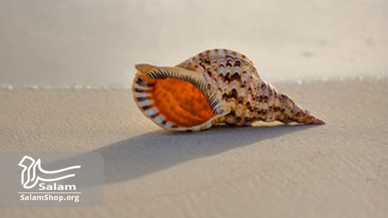 استفاده از صدف در صنایع دستی دریایی